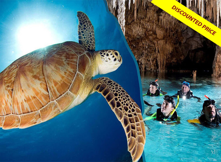 Snorkel Discovery Cenote & Turtles