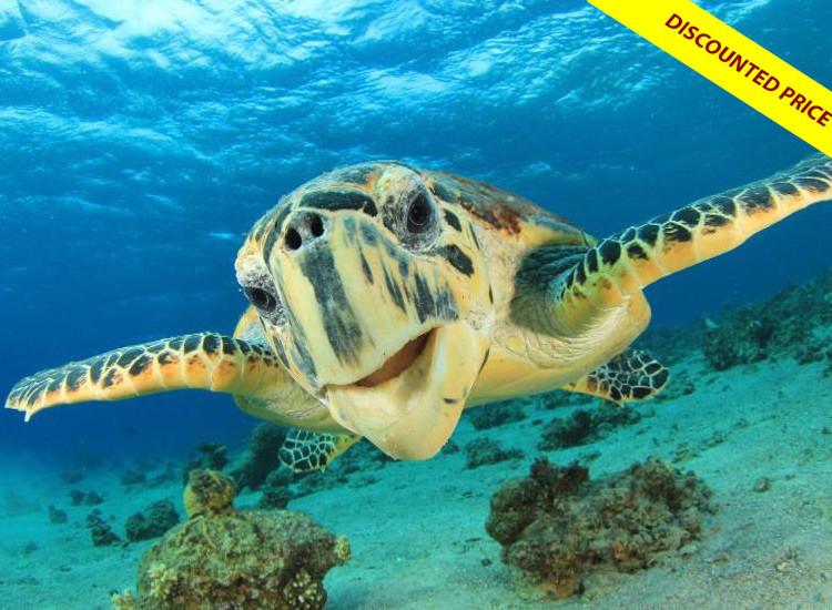 Marine Turtle Adventure