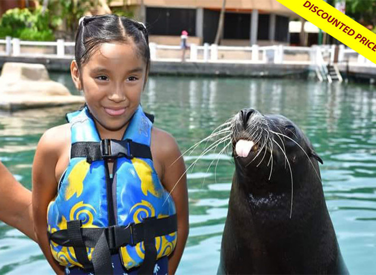 Sea Lion Discovery at Cozumel
