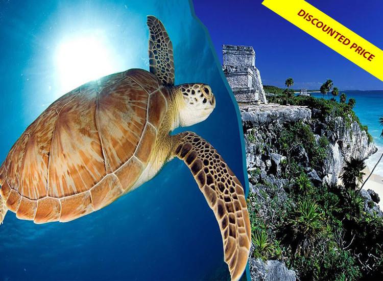 Tulum Discovery & Turtles